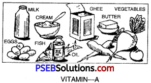 PSEB 10th Class Physical Education Solutions Chapter 2 Balanced Diet 1