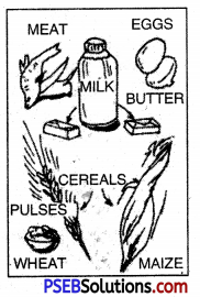 PSEB 10th Class Physical Education Solutions Chapter 2 Balanced Diet 13