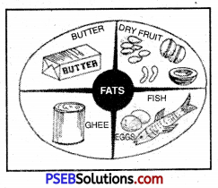 PSEB 10th Class Physical Education Solutions Chapter 2 Balanced Diet 14