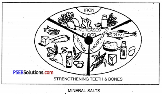 PSEB 10th Class Physical Education Solutions Chapter 2 Balanced Diet 15