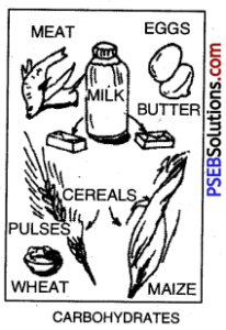 PSEB 10th Class Physical Education Solutions Chapter 2 Balanced Diet 7