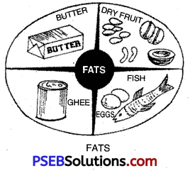 PSEB 10th Class Physical Education Solutions Chapter 2 Balanced Diet 8