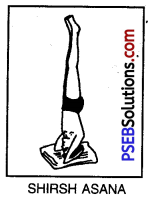 PSEB 10th Class Physical Education Solutions Chapter 3 Yoga 11