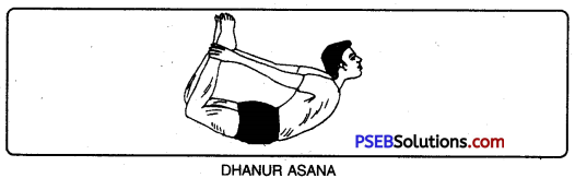 PSEB 10th Class Physical Education Solutions Chapter 3 Yoga 4