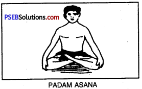 PSEB 10th Class Physical Education Solutions Chapter 3 Yoga 5