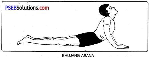 PSEB 10th Class Physical Education Solutions Chapter 3 Yoga 8