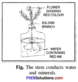 PSEB 6th Class Science Solutions Chapter 7 Getting to Know Plants 10