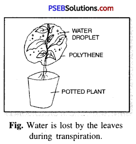PSEB 6th Class Science Solutions Chapter 7 Getting to Know Plants 11