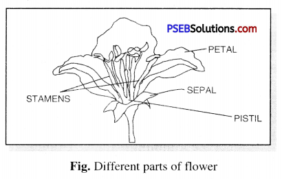 PSEB 6th Class Science Solutions Chapter 7 Getting to Know Plants 2