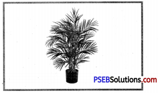 PSEB 8th Class Social Science Solutions Chapter 1 Resources – Types and Conservation 1