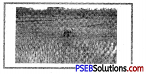 PSEB 8th Class Social Science Solutions Chapter 4 Our Agriculture 8