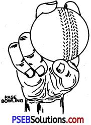 Cricket img 1