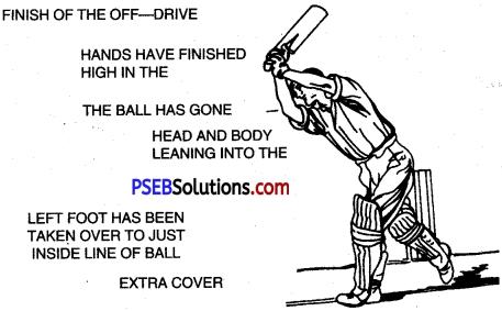 Cricket img 9
