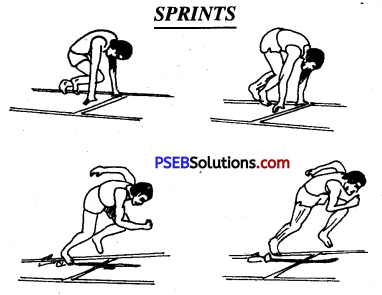 PSEB 10th Class Physical Education Solutions Athletics 3