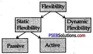 PSEB 12th Class Physical Education Solutions Chapter 1 Physical Fitness 3