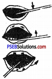 PSEB 6th Class Physical Education Solutions Chapter 1 Health 2