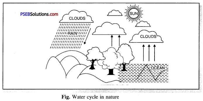 PSEB 6th Class Science Solutions Chapter 14 Water 1