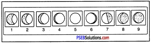 PSEB 6th Class Social Science Solutions Chapter 1 Earth - As a Member of Solar System 5