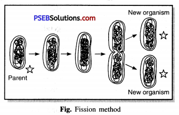 PSEB 7th Class Science Solutions Chapter 12 Reproduction in Plants 1