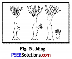 PSEB 7th Class Science Solutions Chapter 12 Reproduction in Plants 2