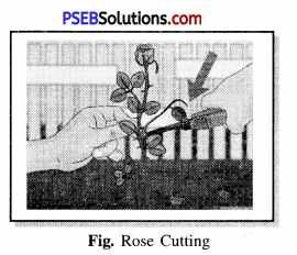 PSEB 7th Class Science Solutions Chapter 12 Reproduction in Plants 5