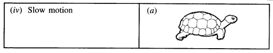 PSEB 7th Class Science Solutions Chapter 13 Motion and Time 3