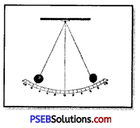 PSEB 7th Class Science Solutions Chapter 13 Motion and Time 5