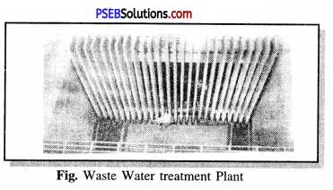 PSEB 7th Class Science Solutions Chapter 18 Wastewater Story 3