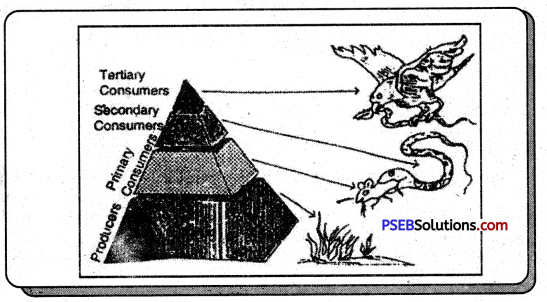 PSEB 7th Class Social Science Solutions Chapter 5 Natural Vegetation and Wildlife 2