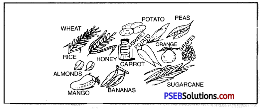 PSEB 8th Class Physical Education Solutions Chapter 2 Nutritious and Balanced Diet 1