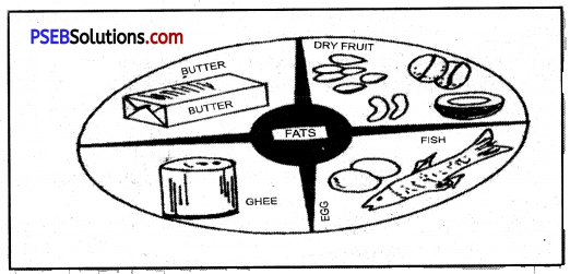 PSEB 8th Class Physical Education Solutions Chapter 2 Nutritious and Balanced Diet 3