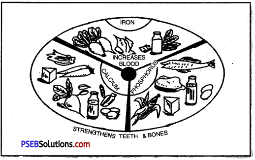 PSEB 8th Class Physical Education Solutions Chapter 2 Nutritious and Balanced Diet 4