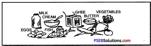 PSEB 8th Class Physical Education Solutions Chapter 3 Vitamins 1