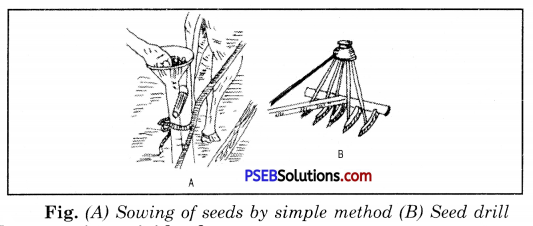PSEB 8th Class Science Solutions Chapter 1 Crop Production and Management 10