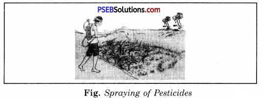 PSEB 8th Class Science Solutions Chapter 1 Crop Production and Management 11