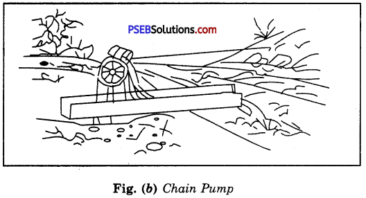 PSEB 8th Class Science Solutions Chapter 1 Crop Production and Management 16