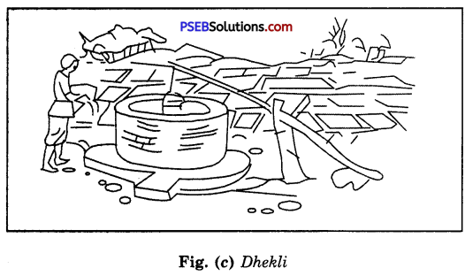 PSEB 8th Class Science Solutions Chapter 1 Crop Production and Management 17