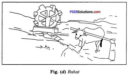 PSEB 8th Class Science Solutions Chapter 1 Crop Production and Management 18