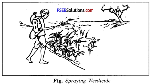 PSEB 8th Class Science Solutions Chapter 1 Crop Production and Management 3
