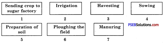 PSEB 8th Class Science Solutions Chapter 1 Crop Production and Management 4