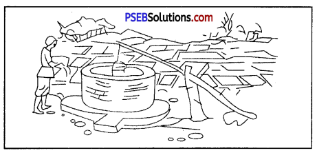 PSEB 8th Class Science Solutions Chapter 1 Crop Production and Management 9
