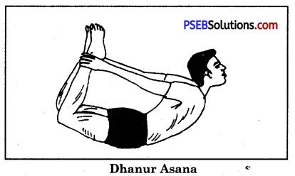 Yogic Exercises or Asanas Game Rules - PSEB 10th Class Physical Education 3