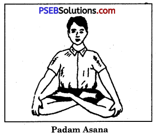Yogic Exercises or Asanas Game Rules - PSEB 10th Class Physical Education 5